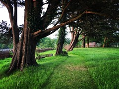 The grounds of The Pig Hotel in Brockenhurst, New Forest (janewynyard) Tags: trees england green nature countryside lush picturesque newforest brockenhurst gardenpath thepighotel