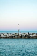 Alone in the Sea (Leonardo Caggianelli) Tags: blue sea sky italy tree beach landscape seaside rocks italia view horizon samsung cliffs minimal clear marche samsungnx samsungnx3000