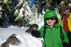 perfect day at teacup (dolanh) Tags: winter snow bird birds skiing lucas crosscountry xcski teacuplake mthoodwilderness