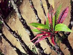 Silva Jardim, Rio de Janeiro (raul_ezequiel) Tags: flores nature garden nikon plantas natural natureza cultura flawer sustentabilidade preservao silvajardim jardinagem reservaambiental pactoglobal