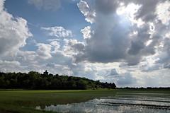South of Heaven () Tags: sky field weather clouds landscape nuvole rice madonna country campagna piemonte cielo fields della vigne paesaggio santuario delle risaia risaie lucedio