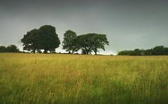 "Visited the local ""hobbitland"" yesterday. .. Lammas Ecovillage Wales Summer Fields Countryside Rural Pembrokeshire Trees Cloud Rain Arbres Campagne Vista поле деревья тучи (Linandara) Tags: trees summer cloud rain wales rural countryside arbres vista fields campagne pembrokeshire ecovillage lammas деревья поле тучи"