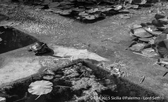 Palermo (Lord Seth) Tags: bw italy aquarium nikon palermo sicilia biancoenero 2015 tartarughe giardinobotanico d5000 lordseth