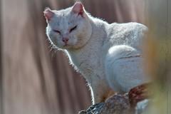 128#365 Instantes (Carmen T. Chaguaceda) Tags: naturaleza gatos desenfoque felinos animales sierradearacena mundorural elcabezuelo calabazares