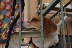 Hund in Tropea (TeamFotoBleh) Tags: italien dog animals tiere hund siesta chillen tropea gemtlichkeit