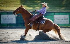 ARCHA Willow Brook 6-26-2016-12 (Webbed Foot Photo) Tags: horses horse pennsylvania archa webbedfootphotography willowbrookfarms pentaxk1 darrenolsen dtolsen webbedfootphoto