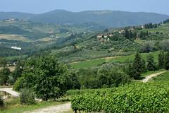 DSC_3875 (erinakirsch) Tags: italy castle landscape florence vineyard view wine vine winery vineyards views tuscany toscana grape grapevine florenceitaly frescobaldi winegrapes nipozzano