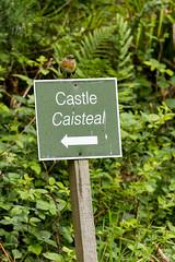 Petit oiseau sur une pancarte, au château de Dunollie