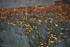 Autumn rocks (skgstyle) Tags: cambridge boston unitedstates massachusetts northamerica 2012 publications bostonist