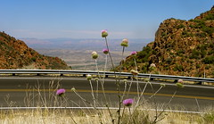 Highway 89a North (redrock flyer) Tags: arizona jerome wildflowers prescott verdevalley jeromearizona prescottarizona 89a purplethistle