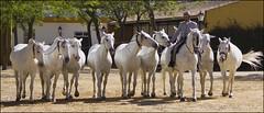 IMG_9271xl (Les D Rowe) Tags: horses caballos cadiz jerez yeguadadelacartuja