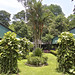 Sukau Rainforest Lodge Garden (Dani Free)
