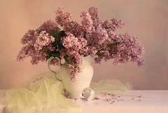 Open My Eyes (panga_ua) Tags: spring branches clusters may lilac lilacs springtime openmyeyes