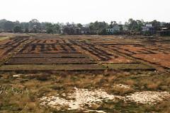 Lumbini Farmland