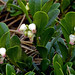 Photo tagged with Bearberry