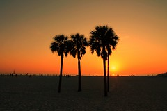Clearwater, FL (_Kendall_) Tags: trees sunset orange seascape color beach beautiful landscape florida palmtrees sillhouette clearwater