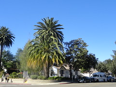 Palm trees, Solvang, CA, USA (Veselina Dzhingarova) Tags: california ca street houses usa house america palms us boulevard cross palm palmtrees palmtree crossroad solvang parkedcars streetview boulevards streetdecoration danisharchitecture solvangca danishhouses solvangcalifornia palmtreescalifornia danishhouse palmtreesusa streetusa americanhouses streetca streetus streetsolvang solvangstreets palmtreesamerica boulevardscrossroad palmtreessolvang solvangusa solvangus solvangamerica crossroadsolvang crossroadcalifornia crossroadusa solvangboulevards usdanishcity parkedcarsinamerica