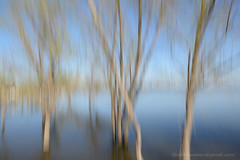 trees in water (See-be-r Photography) Tags: trees abstract motion blur water argentina nikon lanscape d800 2470