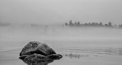 Fog - Salt Creek Rec Area (ChanceKphoto) Tags: ocean white mist black west tree nature water rock fog creek nikon pacific north salt d600
