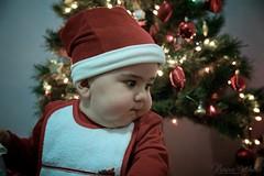 Il mio babbo nipote