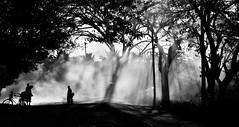 Play of Light (Let us C...!!) Tags: street travel light shadow india tree fog kids village play cycle silhoette srirangapatna