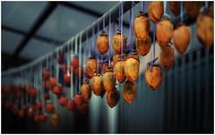 deastrigentization (CKC_1786) (Zichar) Tags: japan persimmon fukuoka kyushu kaki hakata fuyu japanesepersimmon diospyroskaki munakata  tsuyazaki fukutsu fukutsucity asianpersimmon munakatacity tsuyazakisengen