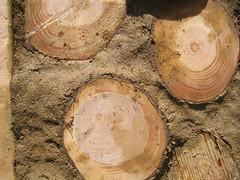 Wood_4630287143_l