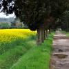 Aguas de março (fiumeazzurro) Tags: chapeau toscana alberoefoglia anthologyofbeauty sailsevenseas