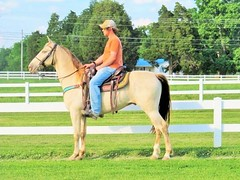 Big Flashy Trail Gelding (brflatshod) Tags: school horses horse animal animals walking driving tennessee champagne tags trail finished endurance flashy trailriding experienced gelding allaround gaited riddenwestern riddenenglish equinenow:user=64351 geo:lat=35483406 geo:lon=864602717