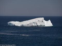 Iceberg Old Perlican (Gene Herzberg) Tags: iceberg