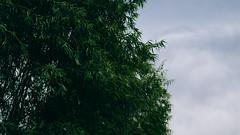 _5020816-6 (25 minutes) Tags: life china street city green nature ed beijing olympus snap forbidden f18 45mm peking omd streetsnap em5 mzuiko omdem5