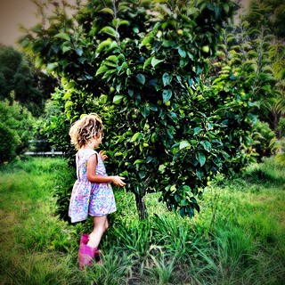 Looking for fruit.