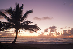 A new day (JR-pharma) Tags: west classic beach sunrise 35mm canon de lens french island eos 1 soleil coconut mark raisins des m42 tropical 5d canon5d caribbean manual plage mk guadeloupe lever antilles leverdesoleil cocotier indies gwada 971 cocotiers le carabes caraibes clairs westindies saintfrancois frenchwestindies fwi saintfranois karukera tropiques antillas i 5dmark1 karukra francoissaint franoisstfranoisraisins clairsplage