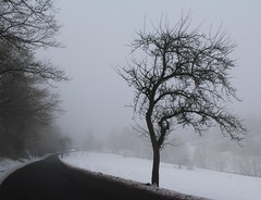 (Gerlinde Hofmann) Tags: germany thuringia village snow mist bürden appletree road nobw silhouette nebel cloudysky