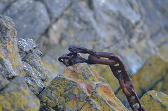 Rusty Chain (ash_wood07) Tags: sea blur dogs lines rock grey focus rocks walk steel quay chain fault lichen stackpole rusy d7000 nikond7000
