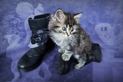 Puss on Boots (pianocats16, miau...) Tags: cute cat kitten boots kitty fluffy fairy fantasy figure puss tale