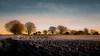 A winter landscape (Adelino Goncalves) Tags: winter light england cold color nature beautiful canon landscape vibrant gloucestershire 6d ericgoncalves