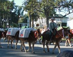 U.S. Forest Service Packer Michael Morse (USFS Region 5) Tags: flowers horses southwest animals rose forest pacific parade pack service pasadena region mules 2015 usfs roseparade2015