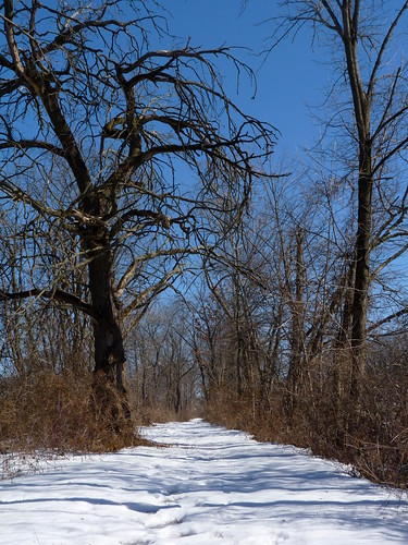 Trees along the towpath