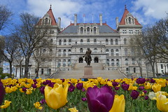 The New York State Capitol building a National Historic Landmark on the Empire State Plaza in the capital city of Albany, New York, USA (RYANISLAND) Tags: flowers flower spring tulips 17thcentury nederland upstateny na tulip albany empirestate newyorkstate albanyny nederlands springflowers tulipfestival albanynewyork iloveny flowerfestival springflower tulipflower newamsterdam ilovenewyork tulipflowers theempirestate albanytulipfestival kingdomofthenetherlands dutchsettlement ny flower flowers spring newyork nyc springtime newyorkcity ilovenewyorkspringdestination albanyny albanynewyork albanytulipfestival tulipfestival tulips dutchtulips upstatenewyork nys springflowers orangewonder orangewondertulip queenwilhelmina holland thenetherlands netherlands dutch welcomespring tulip