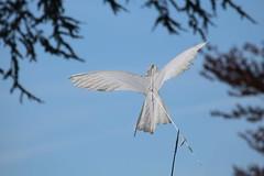 La Hulpe - Prenez l air (20) (Patrick Williot) Tags: la air fete chateau brabant domaine cerfs volants wallon solvay hulpe