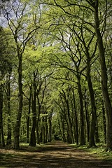 Forest lane in spring time (ParadoX_Design) Tags: road wood trees green forest path lane sprint hilversum springtime corversbos