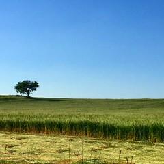 sereno. (alesorride) Tags: blue sky green beautiful yellow erba cielo simply albero prato puglia collina taranto castellaneta alesorride