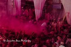 Barsana Nandgaon Lathmar Holi Low res (30 of 136) (Sanjukta Basu) Tags: holi festivalofcolour india lathmarholi barsana nandgaon radhakrishna colours