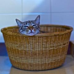 Amadeus - a peculiar way of sleeping (pedrosimoes7) Tags: cat kitten gato gatto kittysuperstar kittenmagazine