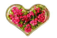 Love (JuliSonne) Tags: love geburtstag iloveyou hochzeit herz liebe liebeserklrung valentinstag valentineday ichliebedich muttertag flowerheart blumenherz herzdekoration blumeninherzform herzglas herzlichegrsse