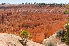 Bryce Canyon (TT_MAC) Tags: red rock landscape brycecanyon formations hoodoos brycecanyonnationalpark