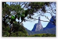 Dedo de Deus  -  Terespolis (o.dirce) Tags: brasil riodejaneiro plantas natureza serra vegetao terespolis dedodedeus odirce