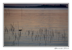 Trasimeno (Alessandro Nenci) Tags: light sunset italy lake night canon lago eos long exposure italia tramonto umbria trasimeno 6d
