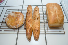 failed leaven (hermitsmoores) Tags: food cooking bread nikon baguette hearth loaf fullframe fx sourdough d800 sourdoughstarter nikond800
